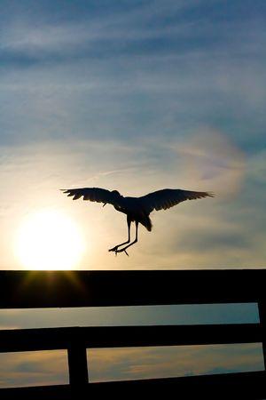 White heron (great egret) landing on pier railing against sunset photo