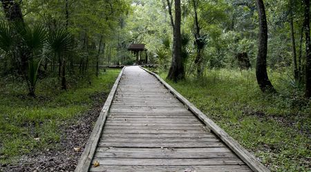 Wooden walkway over dry marshland