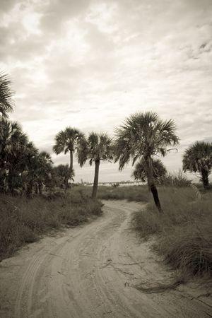 セピア色のトーンのヤシの木の画像や海エンバク並ぶビーチへ続く砂浜の道