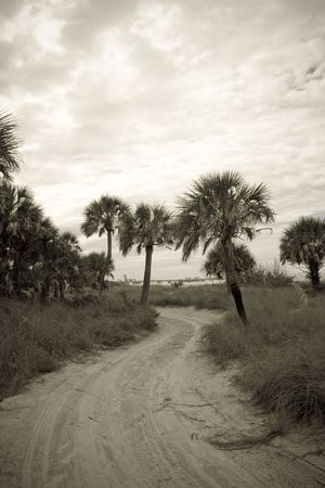 Sepia toned picture of palm tree and sea oat lined sandy road leading to the beach