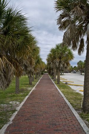 treelined: Red brick paver pathway lined with palm trees by the parking lot at Fort Desoto in Florida