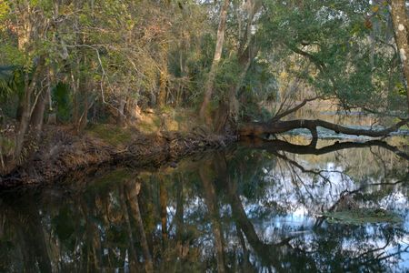 overhanging: View down a river with an overhanging tree
