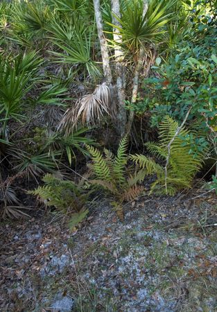 underbrush: Underbrush on the side of a forest path Stock Photo