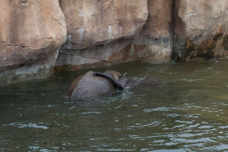 wallowing: A Mother and child elephant snuggling in the water