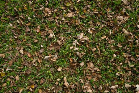 dispersed: View of scattered leaves dispersed in the grass Stock Photo