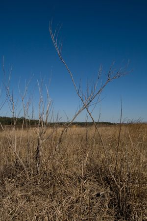 groundcover: image of a dried up grassy field with X shaped branches Stock Photo