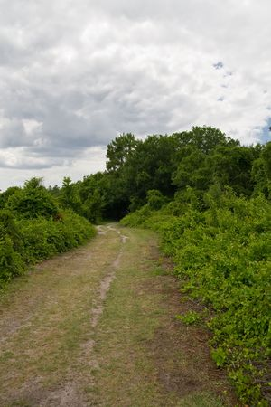 underbrush: Nature trail leading to tunnel through a treed canopy