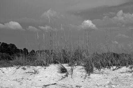 underbrush: Black and white scene of sand and beach grass