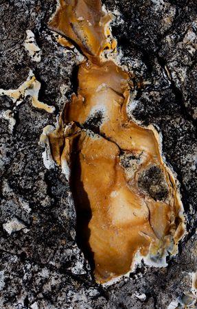Macro shot of interesting pattern in a rock