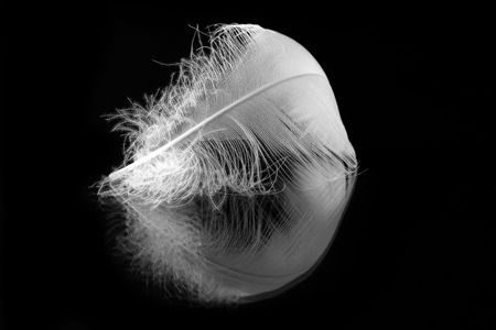 plume: white feather with reflection on black background Stock Photo