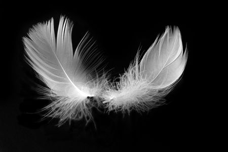 white feather: white feather with reflection on black background Stock Photo