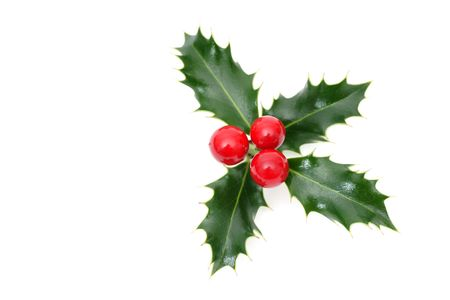 sprig: Sprig of European holly isolated on white