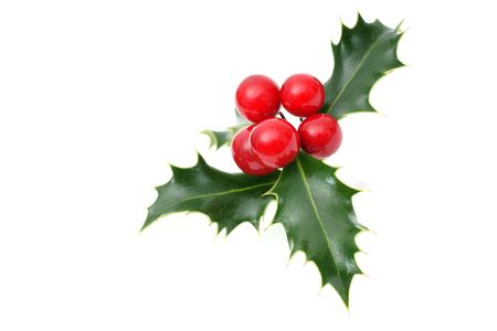 Sprig of European holly isolated on white photo