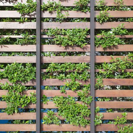 wood fence: Green and wood fence, wall decoration