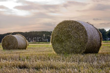 Rolled Hay Bales lay on a field photo