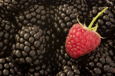A single raspberry stands out among blackberries