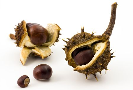 conker: A collection of brown chesnuts
