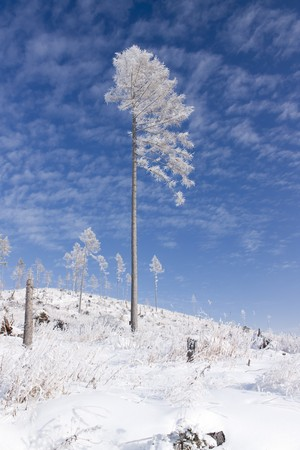 slovak republic: Snowy winter landsape, Slovak republic Stock Photo