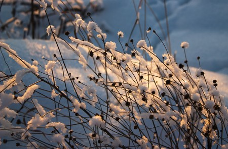 Frozen grass in the evening in back sunset ligh Stock Photo - 4137306