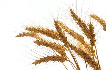 Wheat isolated on white background Stock Photo - 4614678