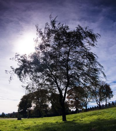 Silhouette of a  tree with the sun behind the tree photo