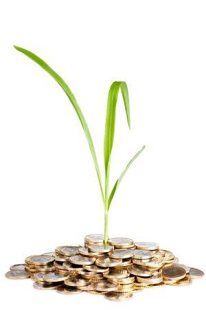 wartości: nowe pędu rośliny Zielone uprawy z pieniędzy