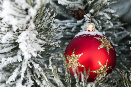 Red glass Christmas bauble on a snow encrusted tree photo