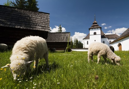 Old village with sheeps in Slovakian countryside Stock Photo - 7445557