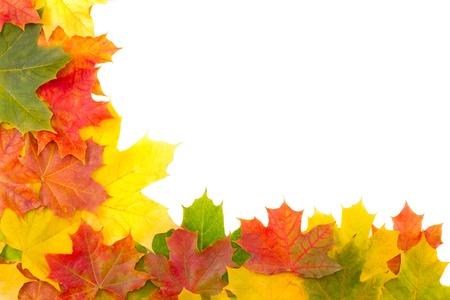 Autumn leaves on white background on border photo