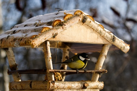 Titmouse eating from the bird feeder in winter Stock Photo - 9136145