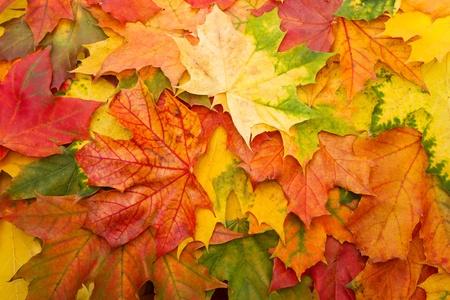 Las hojas secas de un fondo de otoño