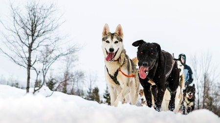 Moment caught on photos - dog sled Stock Photo - 18233840