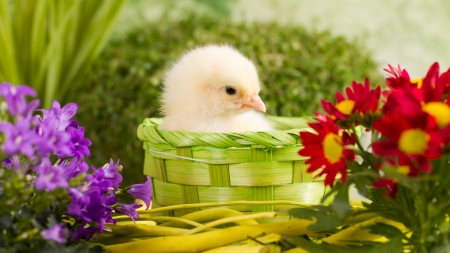 Beautiful little chicken with flowers photo