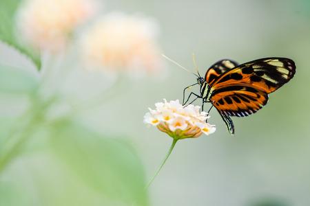Le papillon coloré tropical sur la fleur Banque d'images - 65497103