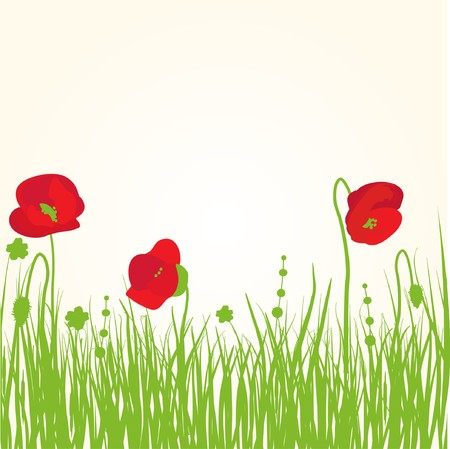 Poppy on the meadow  Illustration