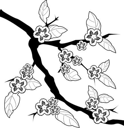 꽃이 만발한: Sakura branch
