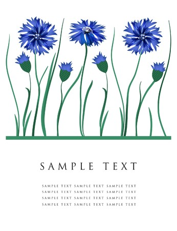 florid: Greeting card with cornflowers  Illustration
