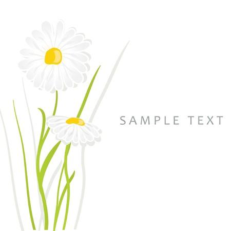 Margarita flores  Ilustración de vector