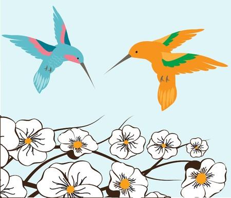 rnanimal: Humming birds