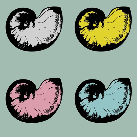 Vintage set of multicolored nautilus shells  Vector