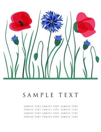 wildflowers: Cornflowers and poppies.  card.