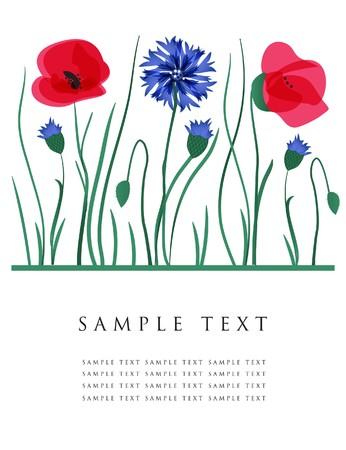 fleurs des champs: Cornflowers et coquelicots. carte.  Illustration