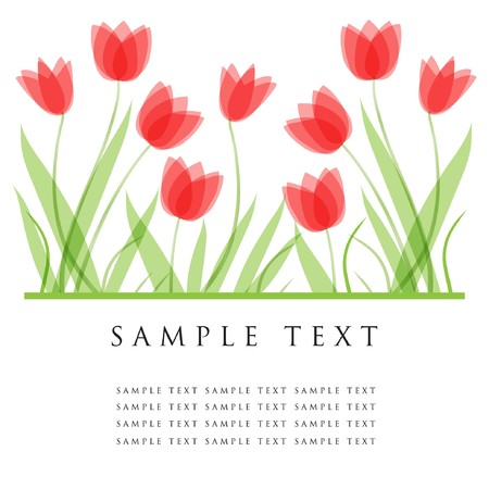Tulip flowers.   card  Stock Vector - 7705570