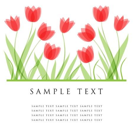 Tulip flowers.   card  Stock Vector - 7705570