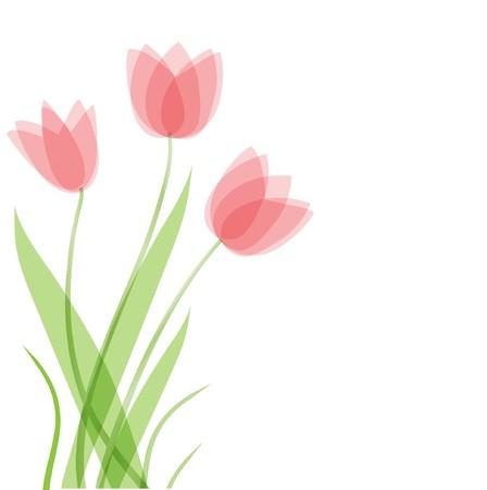 Tulip flowers.  card