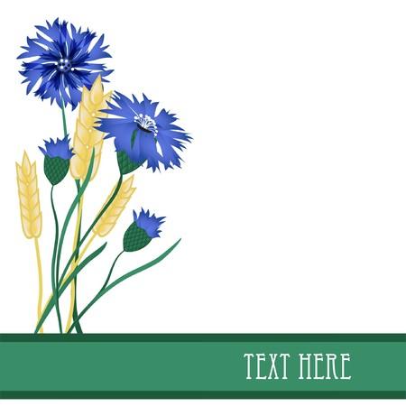 Cornflowers and wheat  Vector