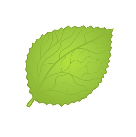 rnart: Green leaf  illustration.