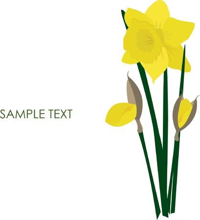 yellowrn: Daffodils on grunge background.   illustration