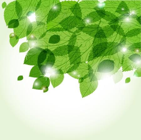 新鮮な緑の葉とライト