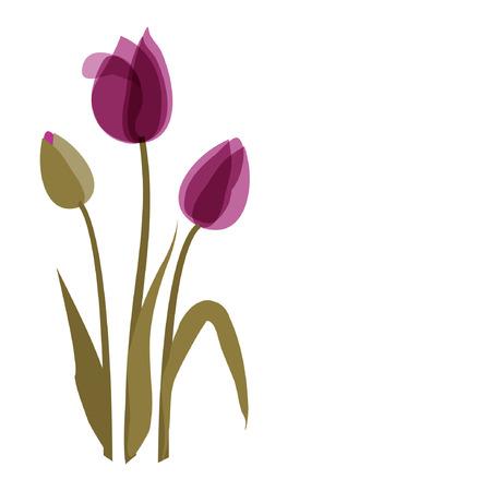 wildblumen: Violet Tulip auf dem wei�en Hintergrund  Illustration